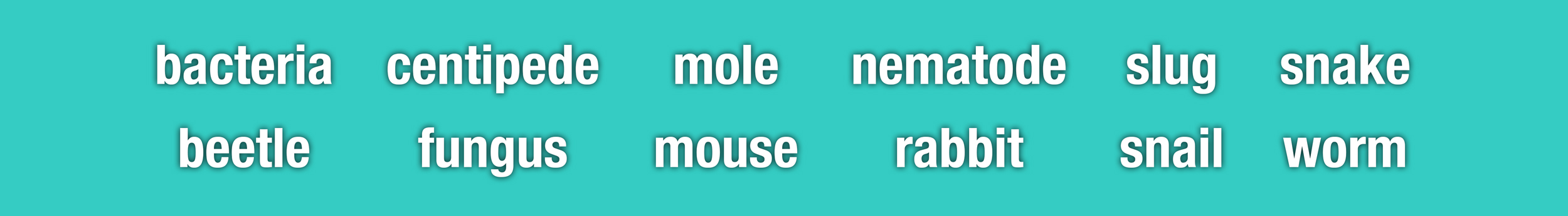 bacteria beetle centipede fungus mole mouse nematode rabbit slug snail snake worm