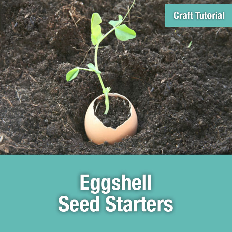 ETG Craft Tutorial | Eggshell Seed Starters