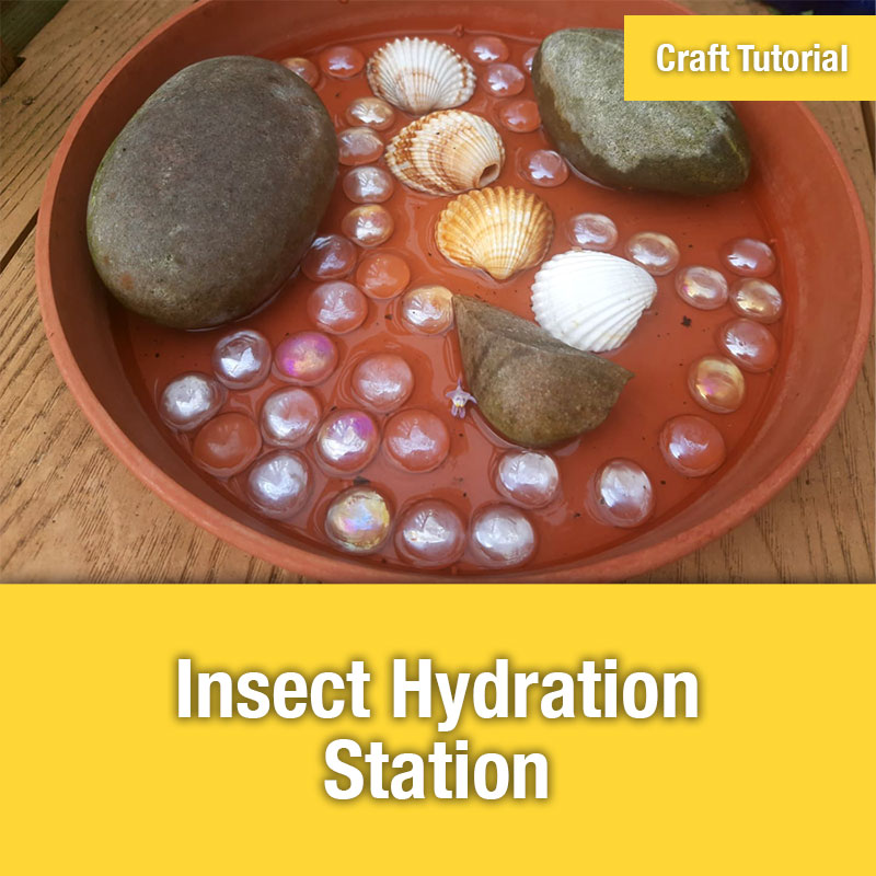 ETG Craft Tutorial | Insect Hydration Station