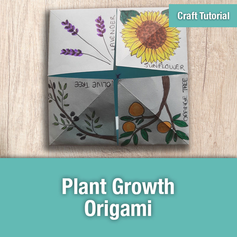 ETG Craft Tutorial | Plant Growth Origami