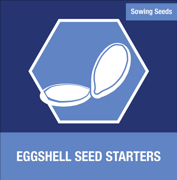 Sowing Seeds: Eggshell Seed Starters