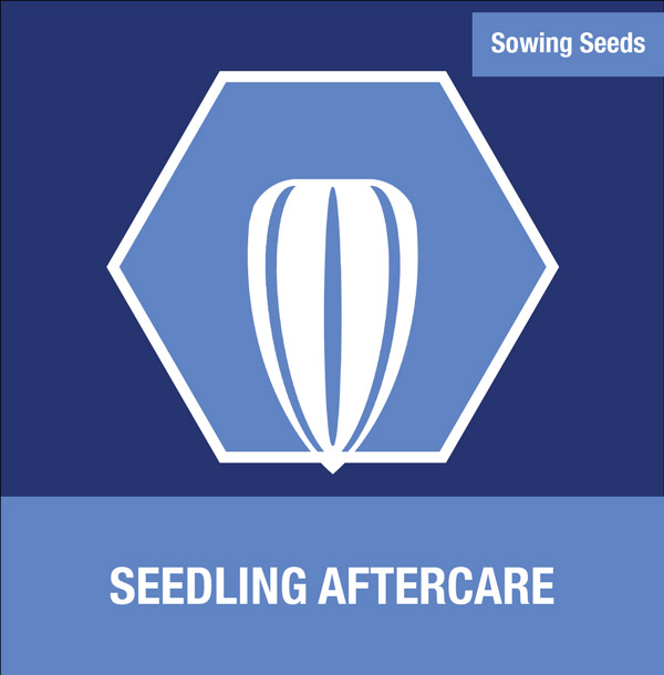 Sowing Seeds: Seedling Aftercare