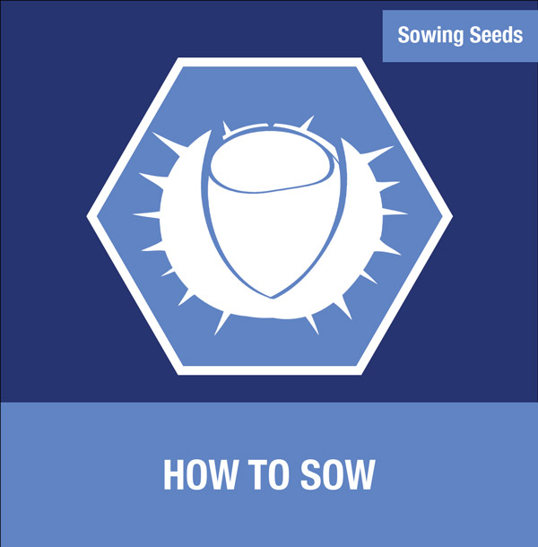 Sowing Seeds: How to Sow