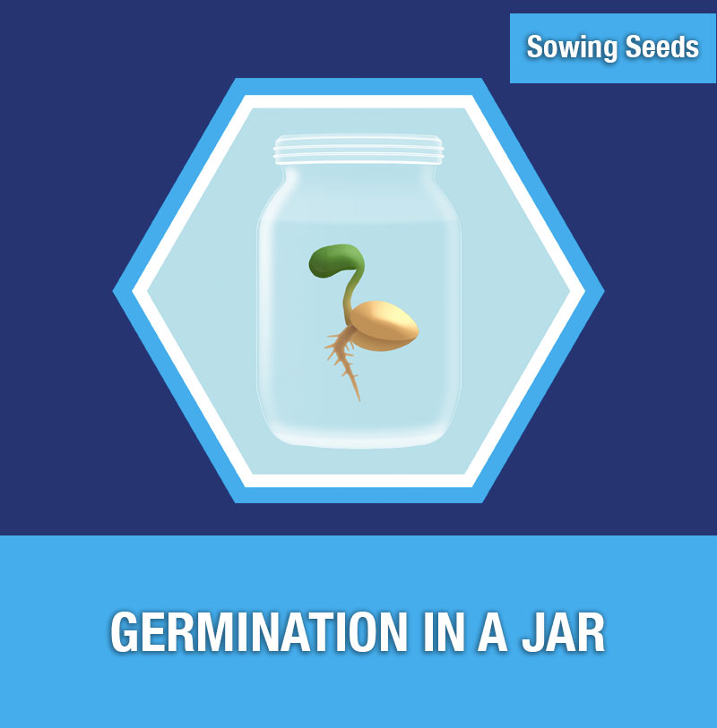 Sowing Seeds: Germination in a Jar