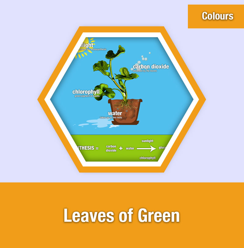 Leaves of Green | COL-1B | IMAGE PREVIEW