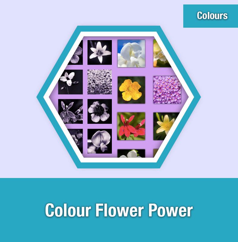 Colour Flower Power | COL-1E | IMAGE PREVIEW