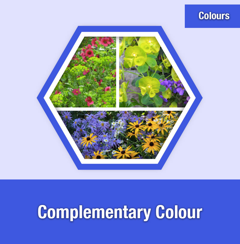 Complementary Colour | COL-3C | IMAGE PREVIEW