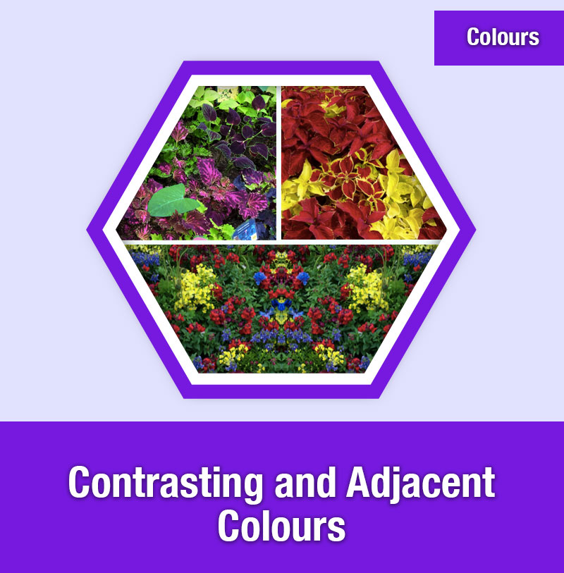Contrasting and Adjacent Colours | COL-3D | IMAGE PREVIEW