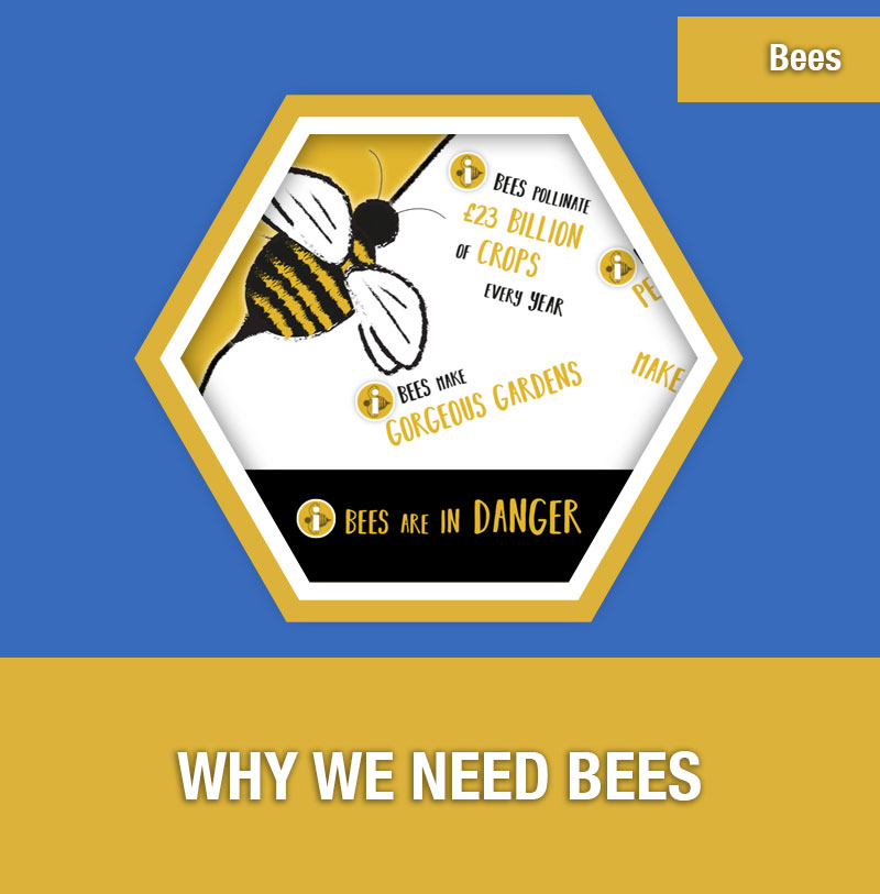 BEE-1A Why We Need Bees | Image Preview