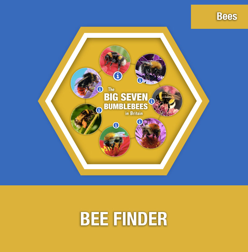 BEE-1E Bee Finder | Image Preview