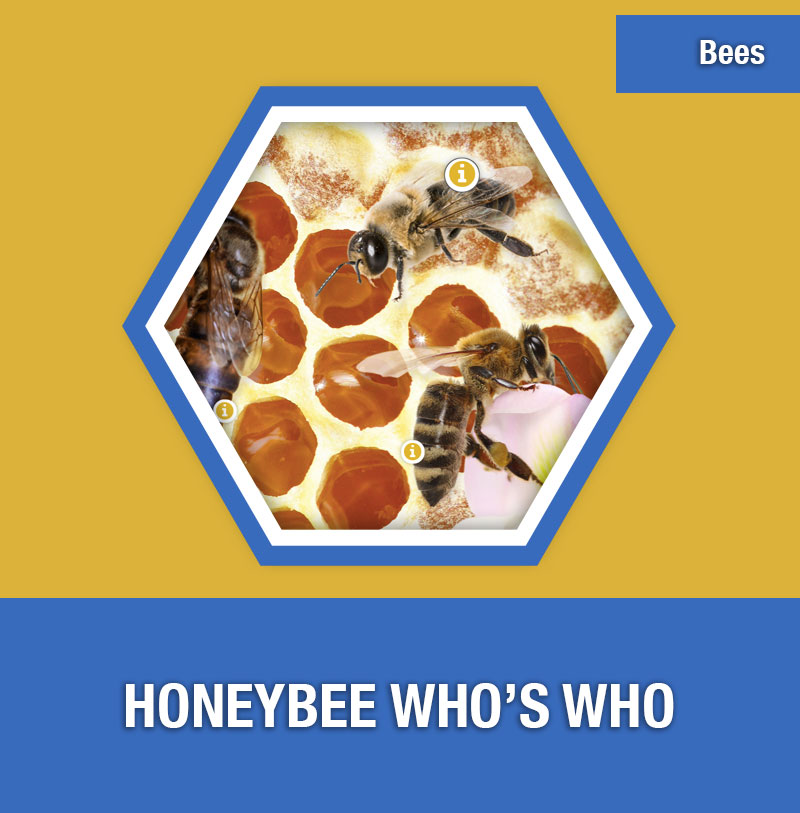 BEE-2A Honeybee Who's Who | Image Preview