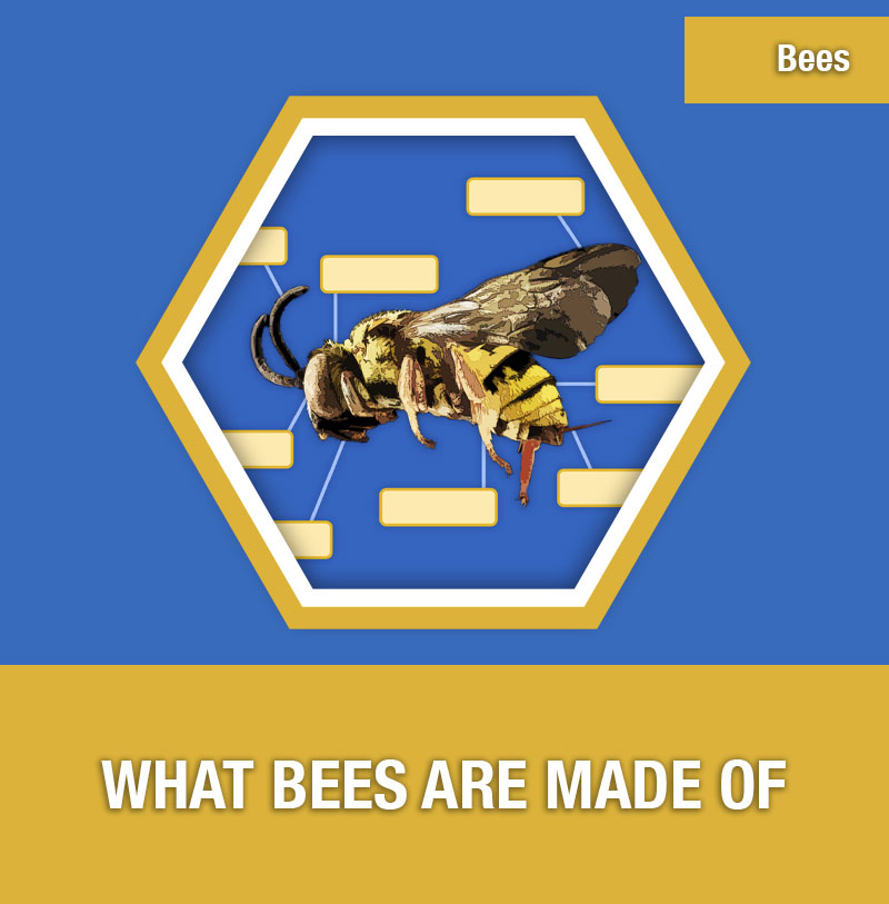 BEE-2D What Bees are Made of | Image Preview