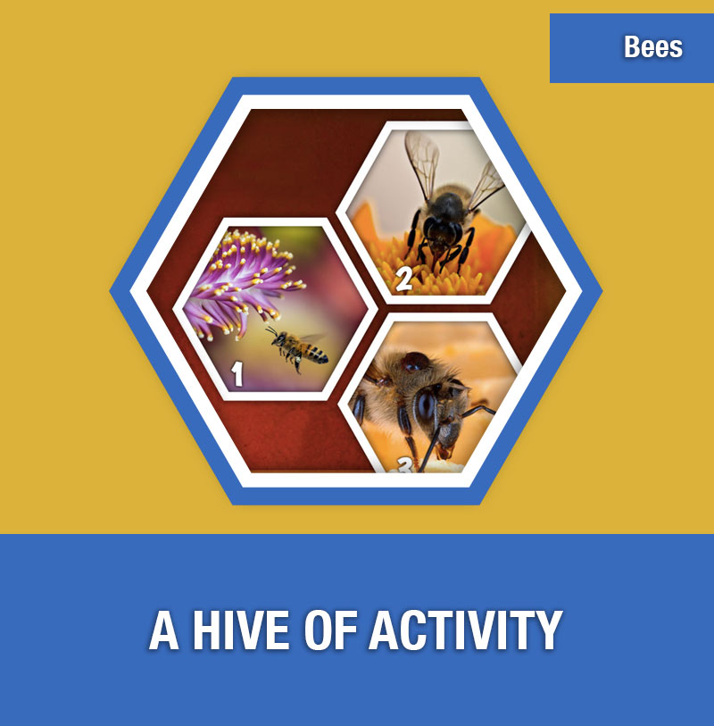 BEE-3A A Hive of Activity | Image Preview