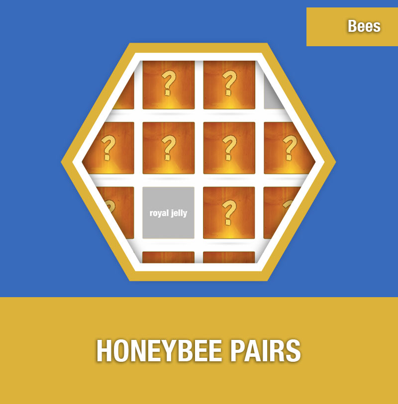 BEE-3B Honeybee Pairs | Image Preview