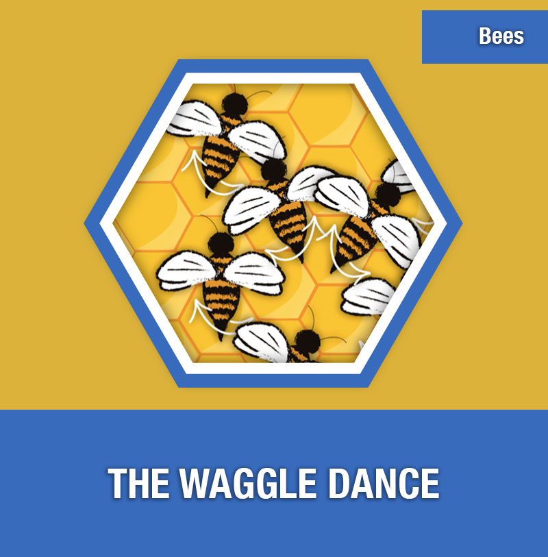BEE-3C The Waggle Dance | Image Preview