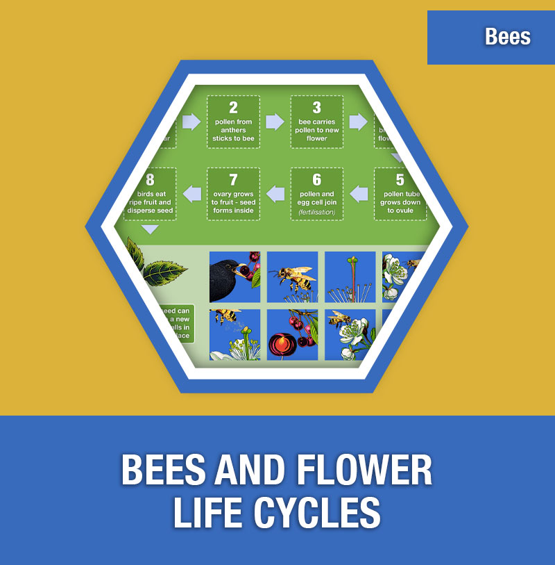Bee-4A Bees and Flower Life Cycles | Image Preview