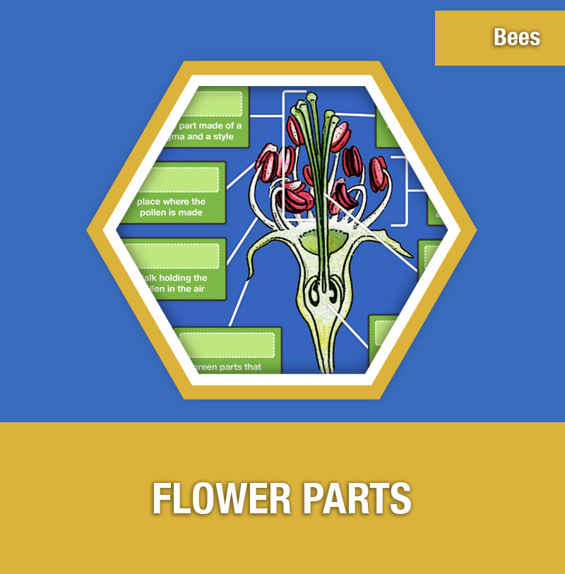 BEE-4B Flower Parts | Image Preview