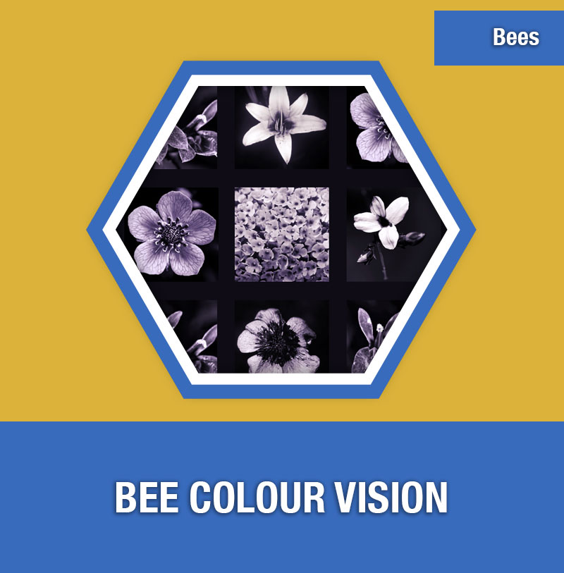 BEE-4C Bee Colour Vision | Image Preview