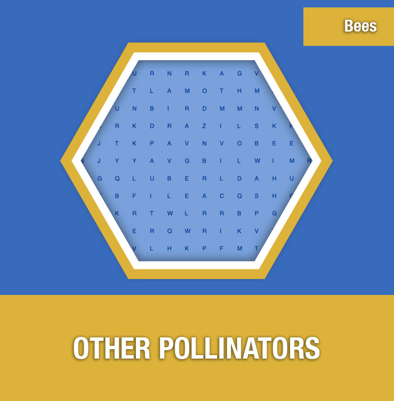 BEE-4D Other Pollinators | Image Preview
