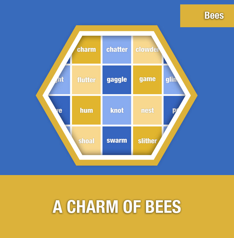 BEE-5B A Charm of Bees | Image Preview