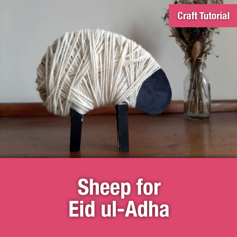 Sheep for Eid ul-Adha IMAGE PREVIEW