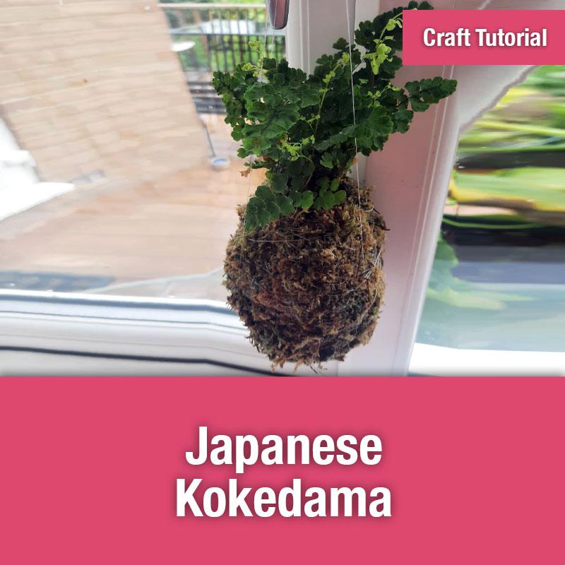 Japanese Kokedama | IMAGE PREVIEW