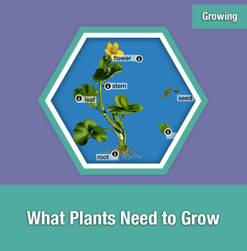 ETG What Plants Need to Grow | IMAGE PREVIEW