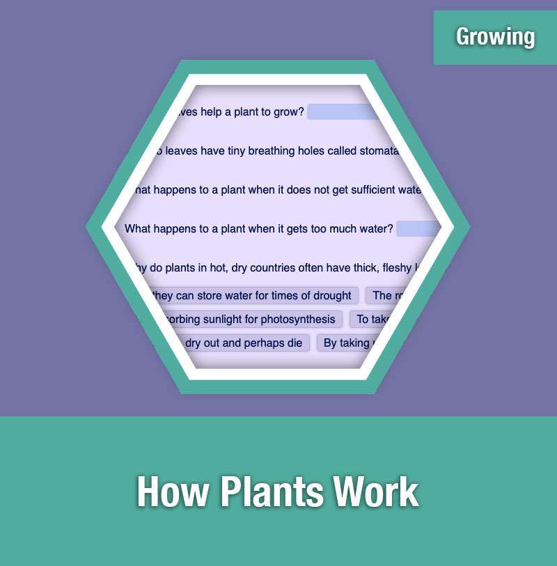 ETG How Plants Work | IMAGE PREVIEW