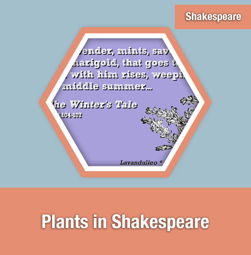 Plants in Shakespeare | IMAGE PREVIEW
