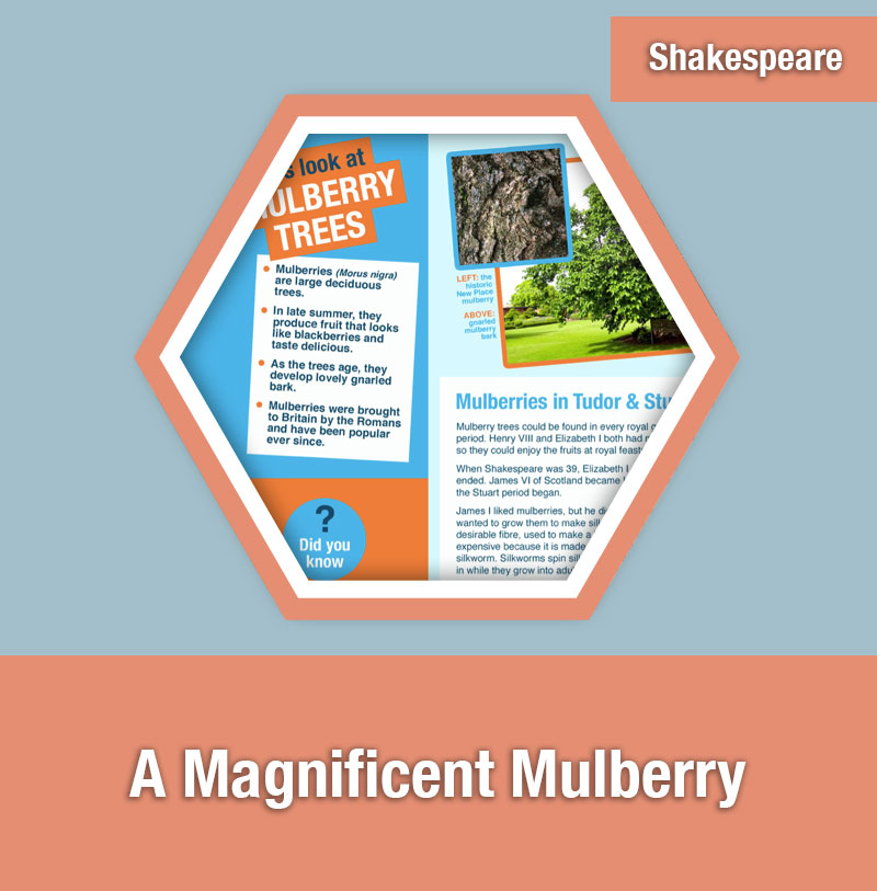 A Magnificent Mulberry | IMAGE PREVIEW