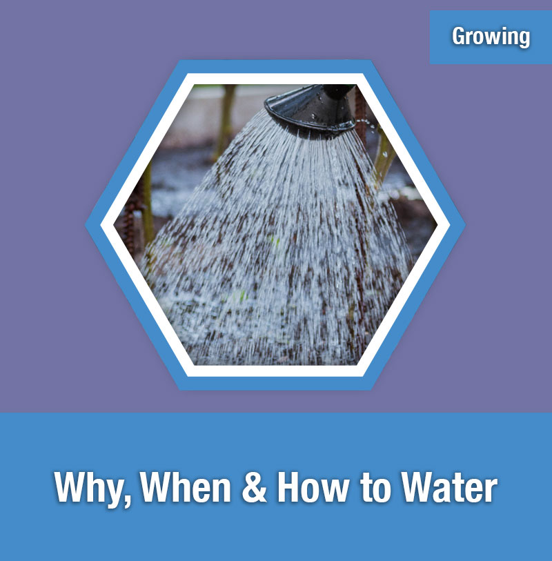 ETG Why, When & How to Water | IMAGE PREVIEW
