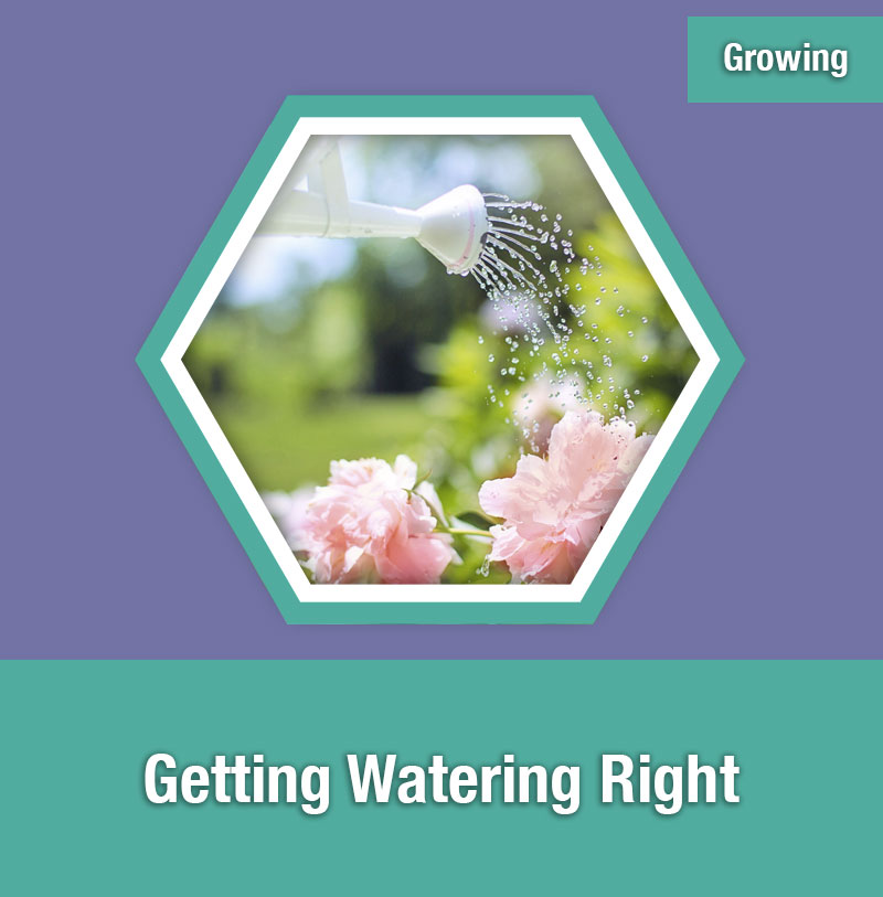 Getting Watering Right | IMAGE PREVIEW
