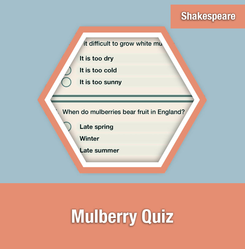 Mulberry Quiz | IMAGE PREVIEW