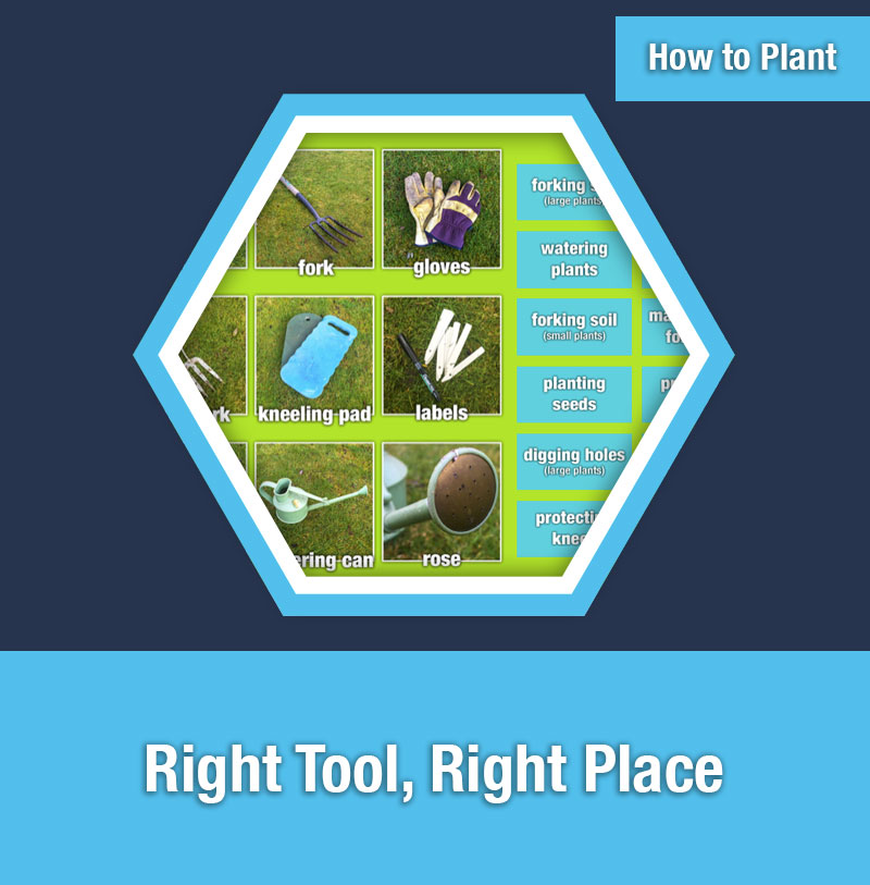 HOW TO PLANT   Right Tool, Right Place