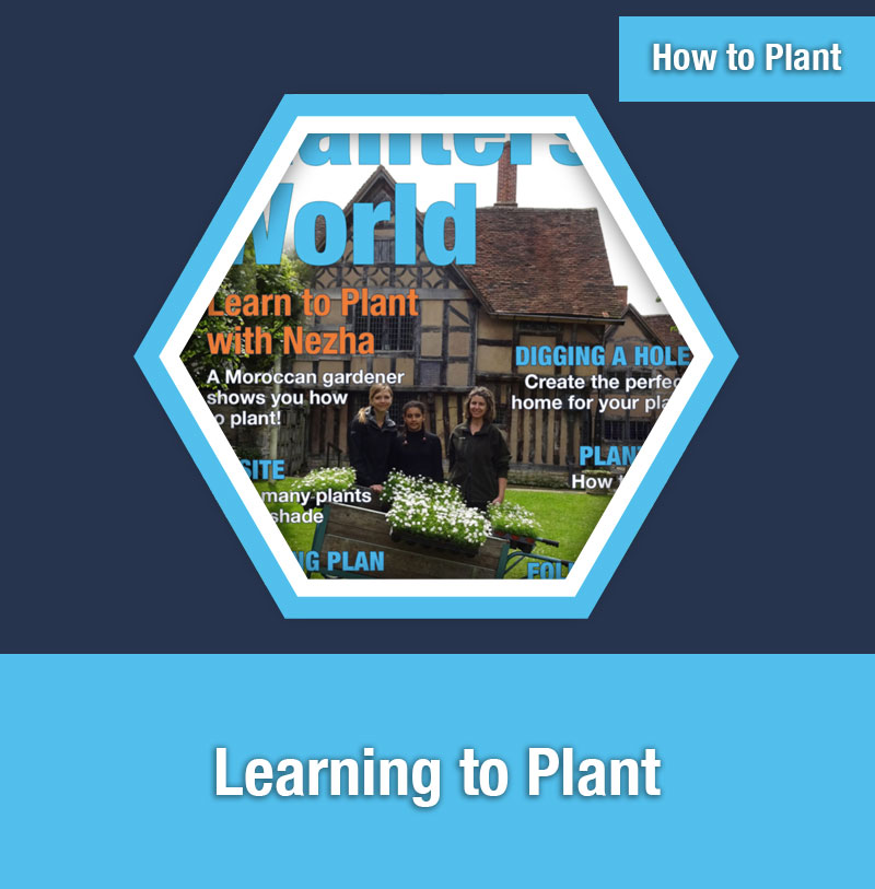 HOW TO PLANT   Learning to Plant
