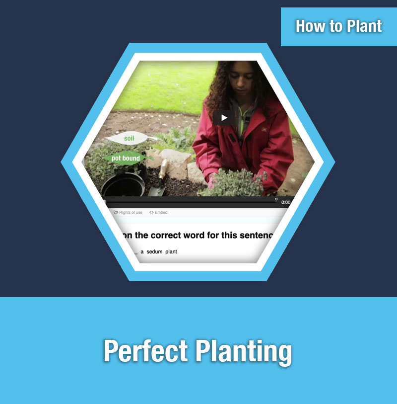 HOW TO PLANT   Perfect Planting