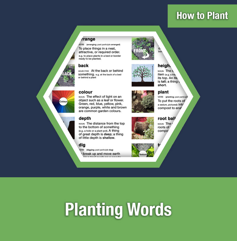 HOW TO PLANT   Planting Words