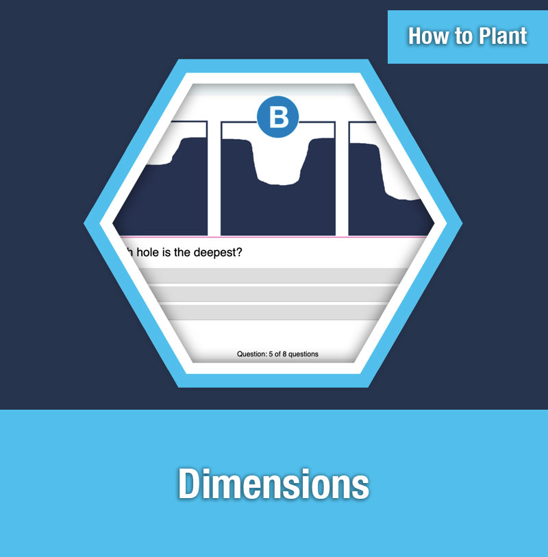 HOW TO PLANT   Dimensions
